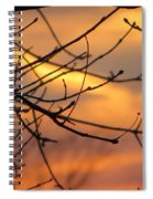Trees Ablaze In Autumn Spiral Notebook