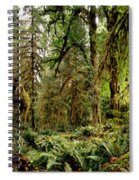 Trees At Olympic National Forest Spiral Notebook