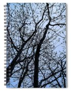 Trees From Below Spiral Notebook
