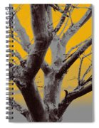 Winter Trees In Yellow Gray Mist 1 Spiral Notebook
