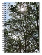 Trees At The Park Spiral Notebook