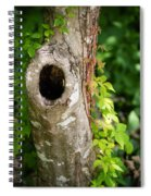 Tree's Mandala Spiral Notebook