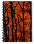 Trees Of Autumn Spiral Notebook