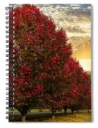 Trees On Fire Spiral Notebook