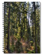 Trees With Moss In The Forest Spiral Notebook