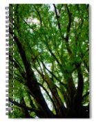 Treetops 2 Spiral Notebook