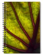 Tributaries Spiral Notebook
