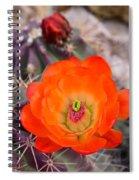 Trichocereus Cactus Flower  Spiral Notebook