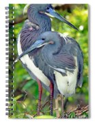 Tricolor Heron Adults In Breeding Spiral Notebook