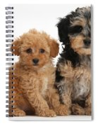 Tricolor Merle Daxie-doodle And Red Toy Spiral Notebook