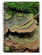 Tricolor Turkeytail Spiral Notebook