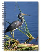 Tricolored Heron At The Pond Spiral Notebook