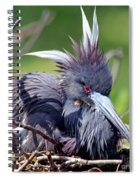 Tricolored Heron Female Incubating Eggs Spiral Notebook