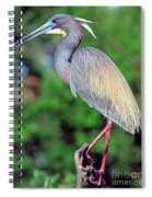 Tricolored Heron In Breeding Plumage Spiral Notebook