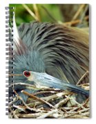 Tricolored Heron Incubating Eggs Spiral Notebook
