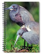 Tricolored Heron Male And Female At Nest Spiral Notebook