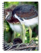 Tricolored Heron Nestlings Spiral Notebook
