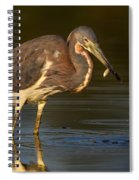 Tricolored Heron With Fish Spiral Notebook