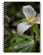 Trillium - After The Rain Spiral Notebook