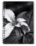 Trillium - Black And White Spiral Notebook