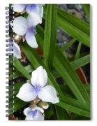 Trillium Chorus Line Spiral Notebook