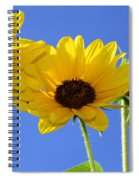 Trio In The Sun - Yellow Daisies By Diana Sainz Spiral Notebook
