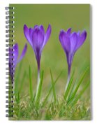 Trio In Violet Spiral Notebook
