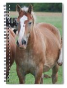 Trio Of Horses 2 Spiral Notebook