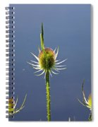 Trio Of Teasels Spiral Notebook