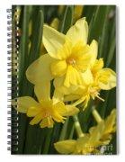 Tripartite Daffodil Spiral Notebook