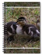 Triplets Spiral Notebook