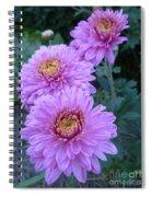 Triplets Of Purple Mums Spiral Notebook