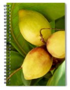 Tropical Almond Spiral Notebook