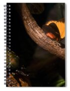 Tropical Butterfly And Rhinoceros Beetle Spiral Notebook
