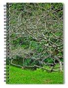 Tropical Entanglement Spiral Notebook