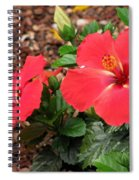 Tropical Hibiscus - Starry Wind 01 Spiral Notebook