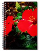 Tropical Hibiscus - Starry Wind 01a Spiral Notebook