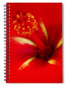 Tropical Hibiscus - Starry Wind 02a Spiral Notebook