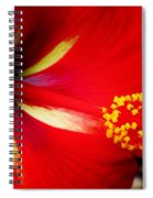 Tropical Hibiscus - Starry Wind 04a Spiral Notebook
