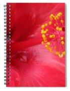 Tropical Hibiscus - Trinidad Wind 02 Spiral Notebook