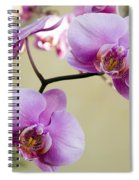 Tropical Radiant Orchid Flowers Spiral Notebook