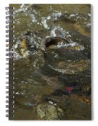 Trout Feeding Surface Rainbow Trout Art Prints Spiral Notebook