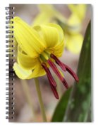 Trout Lily Or Dog-toothed Violet Spiral Notebook