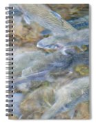 Trout Pond Abstract Spiral Notebook