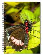 True Cattleheart Butterfly Spiral Notebook
