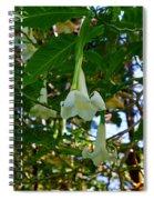 Trumpet Flower Spiral Notebook