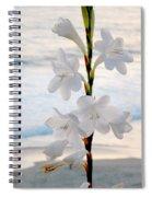 White Trumpet-shaped Flowers At Dana Point Beach California  Spiral Notebook