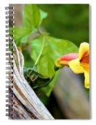 Trumpet Vine Spiral Notebook