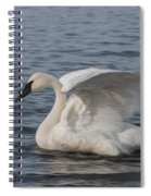 Trumpeter Swan - Profile Spiral Notebook