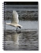 Trumpeter Swan Walking On Water Spiral Notebook